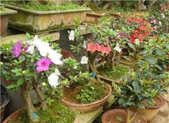 家里种什么植物风水好 家中该养哪些花卉呢