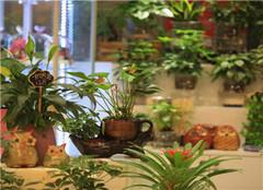 店里养带刺的植物风水禁忌 摆放哪些植物旺财呢