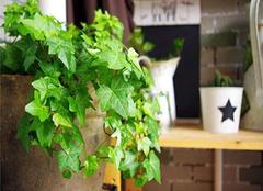 卫生间风水植物有哪些 有哪些作用呢