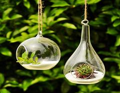 小口玻璃瓶养什么植物   这10个绝对是装饰小能手