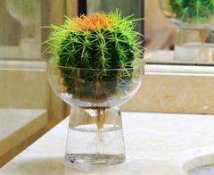 除了绿萝  还有哪些适合卧室养的水培植物呢?