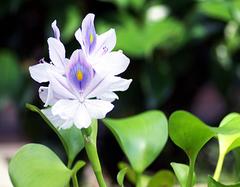 水养什么植物易成活   懒癌人最喜欢的水养植物推荐