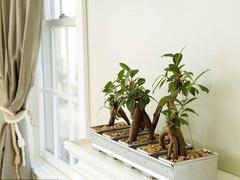 室内植物怎么摆放比较好 有哪些窍门