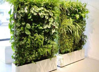屏风摆放什么植物好 屏风摆件摆放禁忌