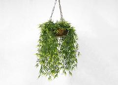 净化空气的室内植物有哪些 净化空气的室内植物介绍