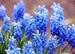 常见花的花语有哪些