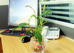  办公桌放什么植物风水好 选对植物事业更顺