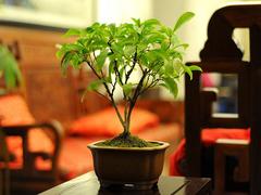 室内植物怎么摆放?有哪些摆放窍门?