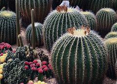防辐射植物有哪些 孕妇防辐射植物有哪些