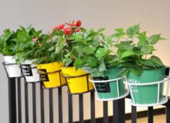 室内阳台或者办公室摆放什么盆栽植物好,怎么样?