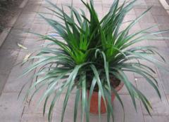 客厅适合放什么植物 2018哪些植物可以招财