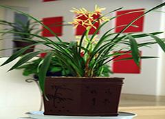家里种什么植物风水好  家里放什么植物招财辟邪