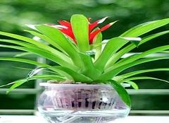 水培植物多久换一次水 水培植物要换水洗根吗