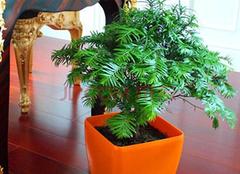 办公室摆放什么植物好 办公室摆什么植物招财