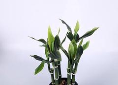 八种植物招财又旺宅 适合室内养的植物有哪些