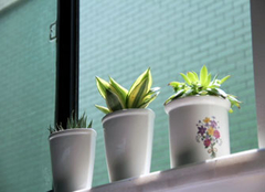 办公室摆什么植物好 办公室摆放风水植物注意事项