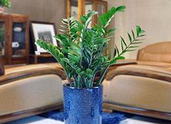 客厅摆什么植物最旺家 客厅里放什么最招财