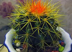电脑桌上放什么植物防辐射 吊兰可以放卧室吗