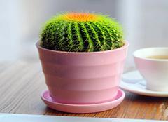 办公室防辐射的植物有哪些 孕妇办公室防辐射植物