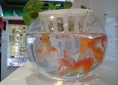 客厅鱼缸摆放风水禁忌 客厅装修如何摆放鱼缸