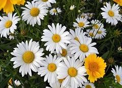 世界上花语最冷漠的花 十二星座代表的花