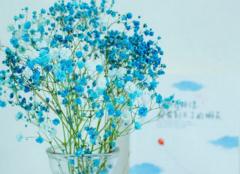 满天星不同颜色的花语是什么 满天星买来后怎么保存
