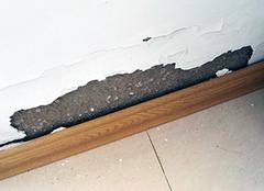 客厅墙皮脱落怎么处理 如何防止墙皮脱落