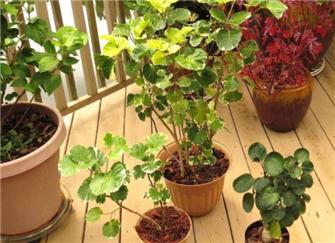 家里养啥植物风水好 家里植物摆放风水