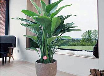 家庭养什么花风水好 家庭客厅花卉摆放风水
