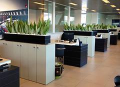 办公室适合放什么植物风水好 办公室绿植摆放风水