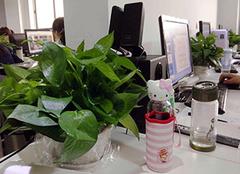 办公室的植物风水讲究 办公室风水植物防小人