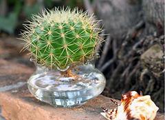 领导办公室放什么植物好 办公桌植物摆放位置