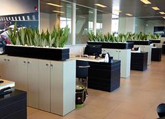 办公室养什么植物风水好 办公室办公桌植物摆放风水