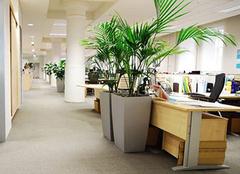 办公室植物哪种好 办公室风水植物摆放