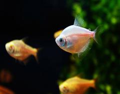卫生间养鱼好吗 卫生间养鱼风水讲究
