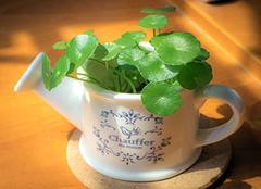 风水中最招财的植物 办公室养植物风水