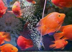 做生意养什么鱼最招财 做生意养几条鱼最招财