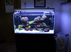 家里养什么鱼好 家里养鱼养几条好