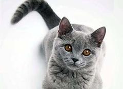 猫屎是什么垃圾 猫砂是什么垃圾