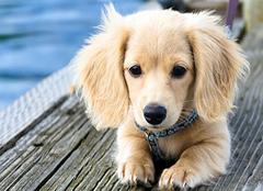 ?寵物的毛算什么垃圾 寵物糞便屬于什么垃圾