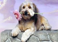 属狗的人财运好不好 属狗的人2019年爱情运势