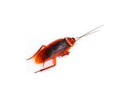家�Y有�I蟑螂怎麽�k 如何防止※蟑螂爬到床上