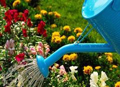 夏天浇花的最佳时间 夏天浇花几天一次