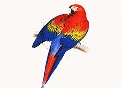 玄武鹦鹉多少钱一只 玄武鹦鹉会说话吗