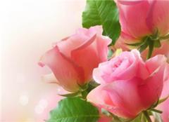 十二星座守護花 各類花的花語大全