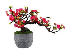 海棠花的养殖方法 海棠花价格