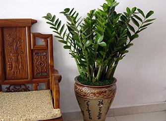 客厅摆什么植物最招财 家里为什么不能养吊兰