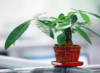 客厅摆放什么绿植聚财 家里再穷也要养这3种花