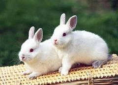 2019年属兔的人运势 属兔的人和什么属相配