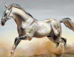 今年属马的财运和运气如何 属马的人什么性格特点